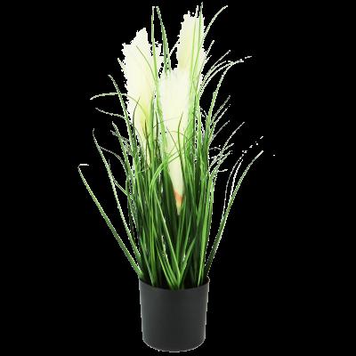 Kwitnąca trawa w doniczce 59 cm